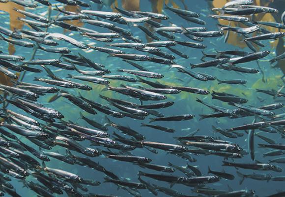 Ruta de la sardina. Sitios que hay que visitar sí o sí en España