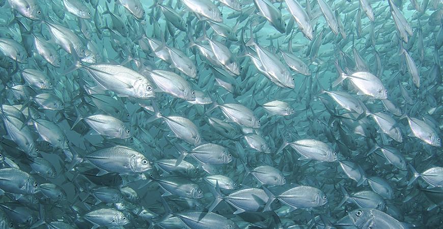 El gusto por el pescado azul ¿a qué se debe?
