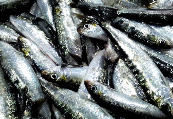 Comer sardinas en los meses con erre ¿sí o no?